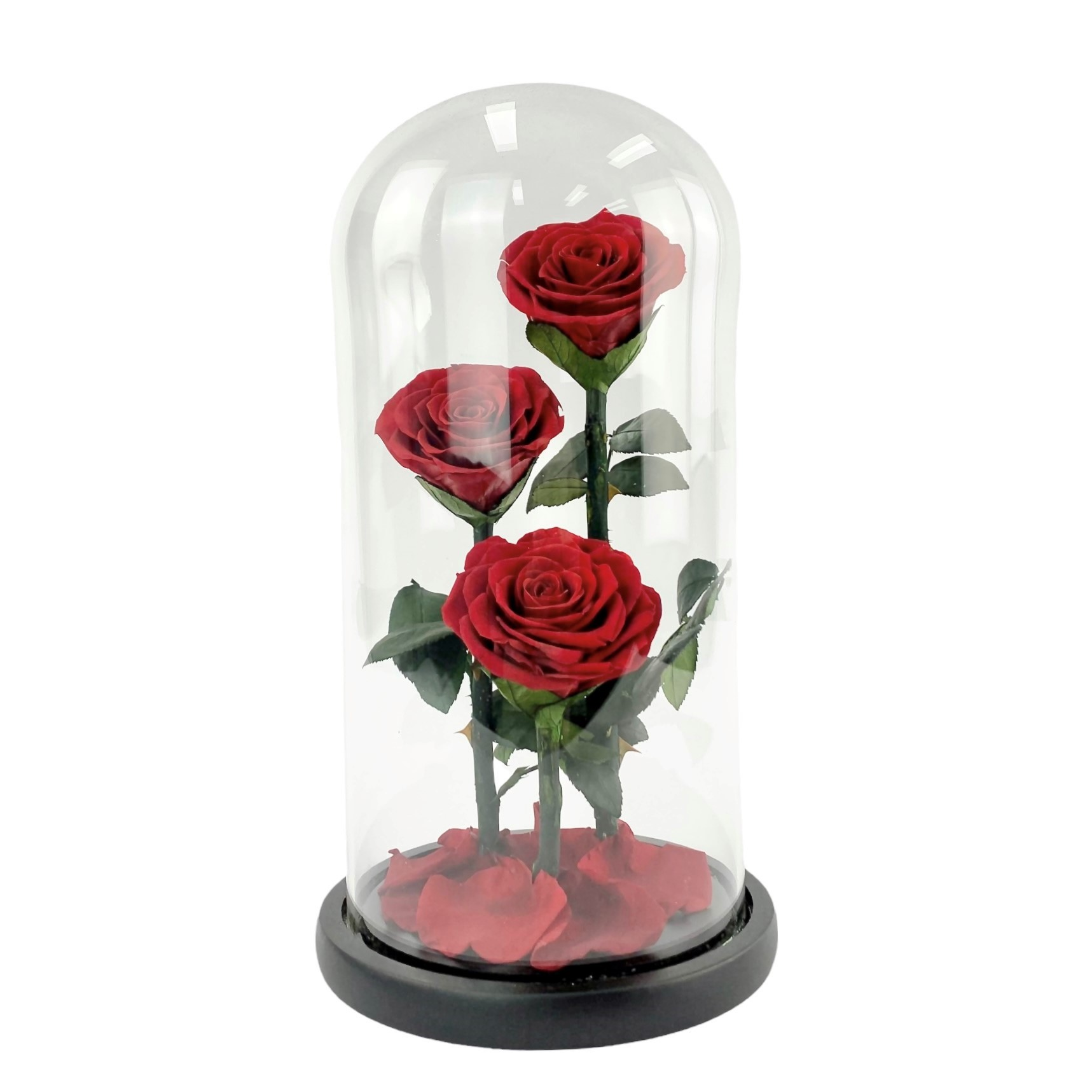 Forever Yours - three stems of preserved red roses in glass dome gift box.